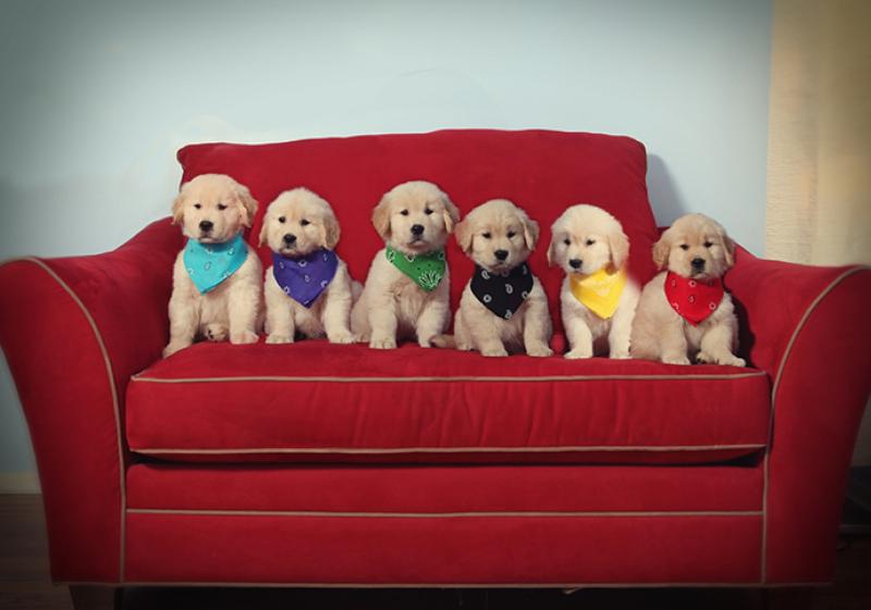 AAAAA  Dogs